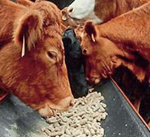 В кормосмеси для сельскохозяйственных животных и птиц выявлена метелломагнитная примесь...