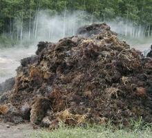 В чем опасность органических удобрений?