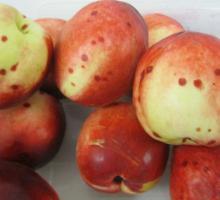 В персиках выявлена калифорнийская щитовка...
